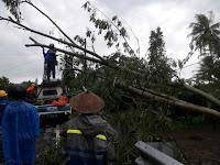Angin Kecang Beberapa Pohon Di Beberapa Titik Sleman Tumbang