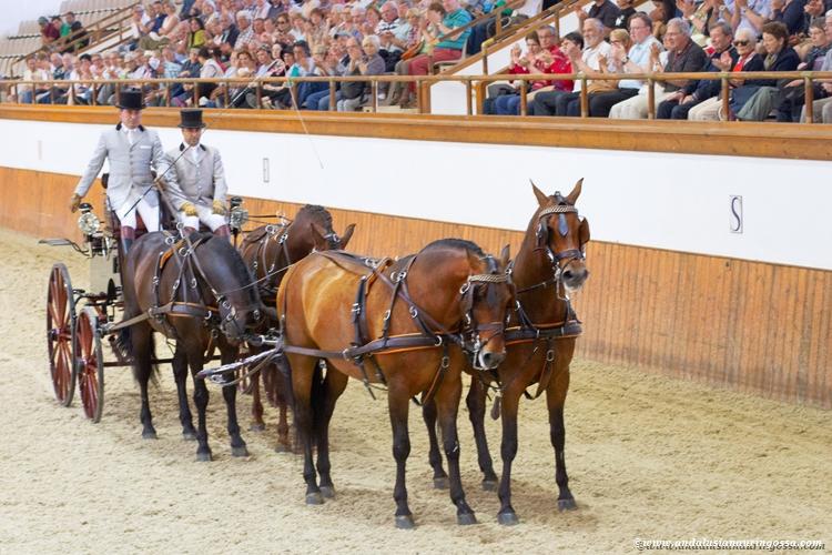 Andalusian kuninkaallinen hevoskoulu Jerez_Andalusian Royal Equestrian School Jerez_11