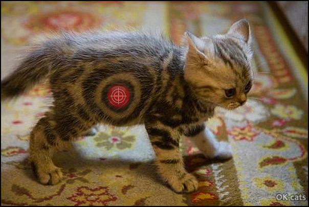 Photoshopped Cat picture • OK, Target-Kitten is ready you can shot right meow, but kitty is not amused.