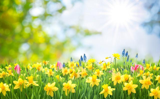 boring backyard - flower boarder