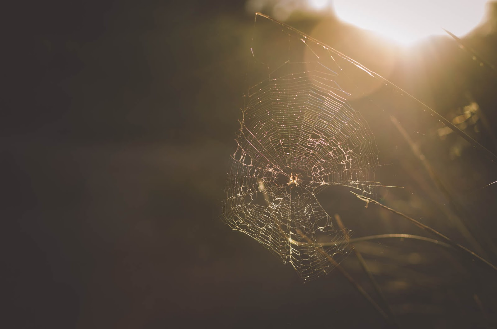 cobweb images
