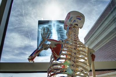 Arzt, Facharzt, Termin, Krankenhaus, Krankheit, Skelett, Fenster, Röntgenbild, Blog, Humor, Frau E. notiert
