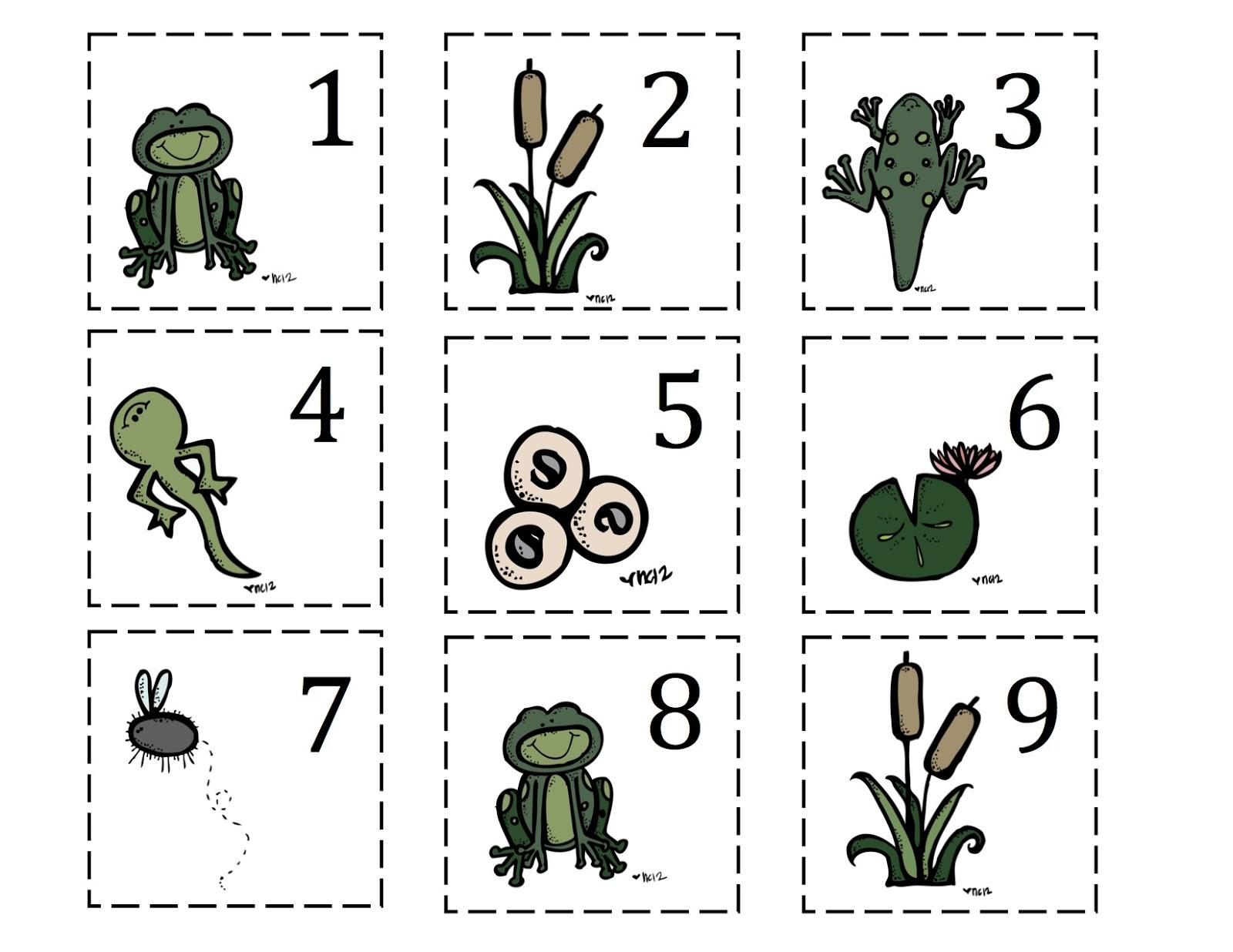 Frog Life Cycle Worksheet Preschool