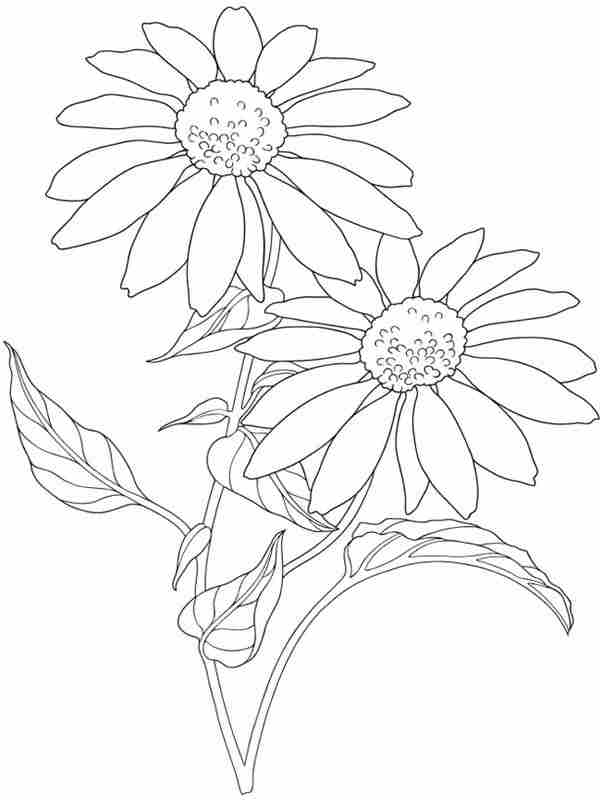12 garden flowers printable coloring pages for adult for Flower garden coloring pages printable