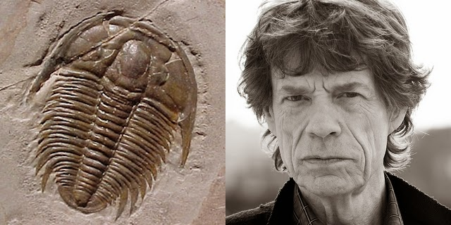 La ninfa acuática de Jagger