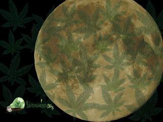 luna cultivo de marihuana