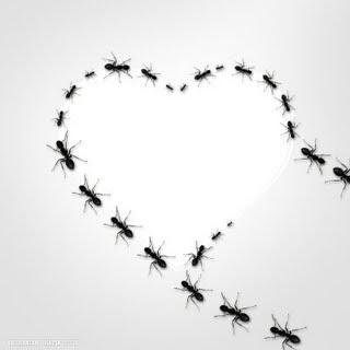 7 Hal Tentang Semut Yang Bisa Kita Terapkan Dikehidupan Sehari Hari