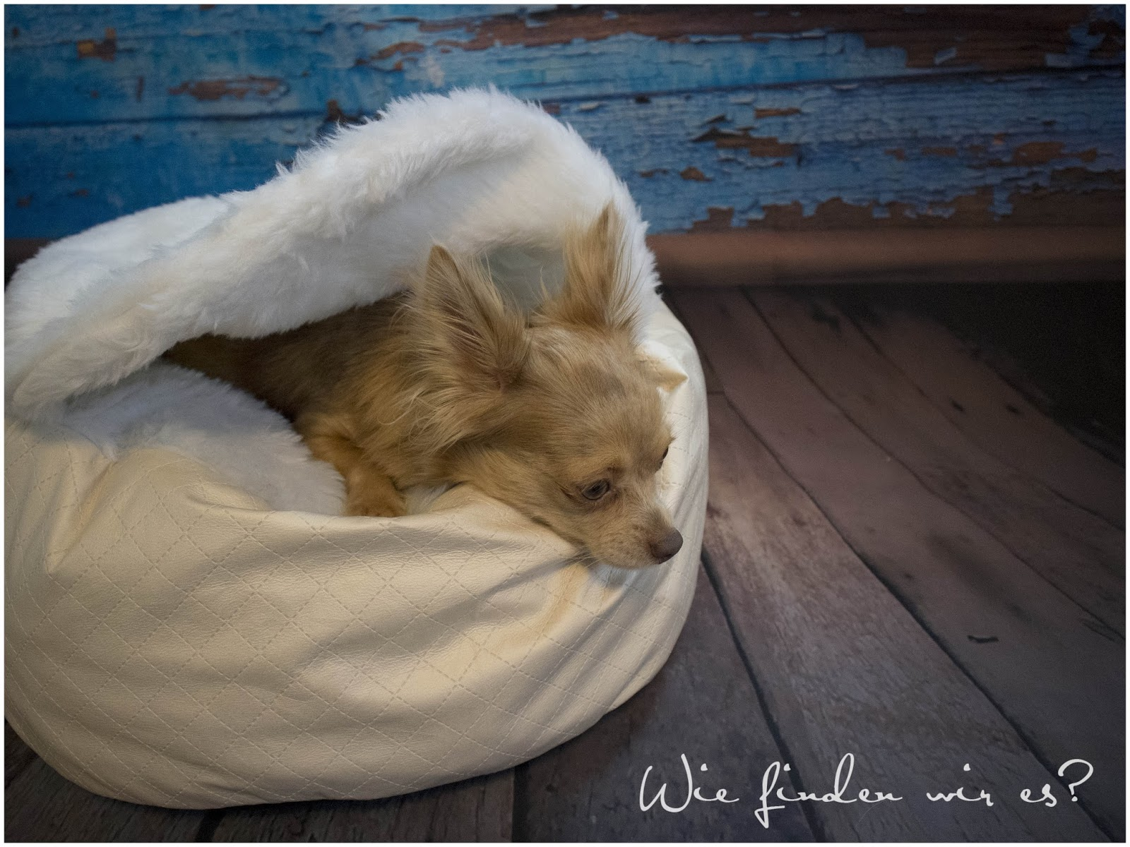 Freebook Hundebett inkl. integriertem Schlafsack und Gewinnspiel