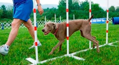 Training Your Dog Humanely