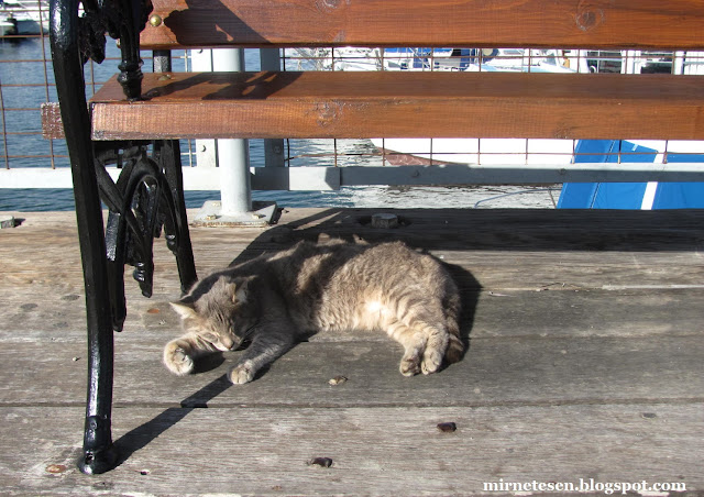 Кипр, Ларнака - кот спит под лавкой на причале