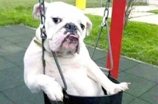 Give me a push bulldog