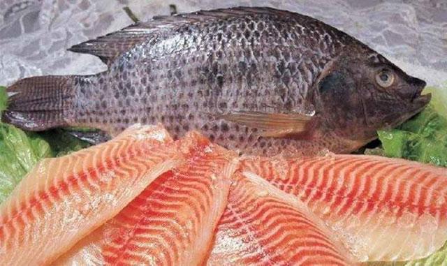 Kegunaan Lain Ikan Nila