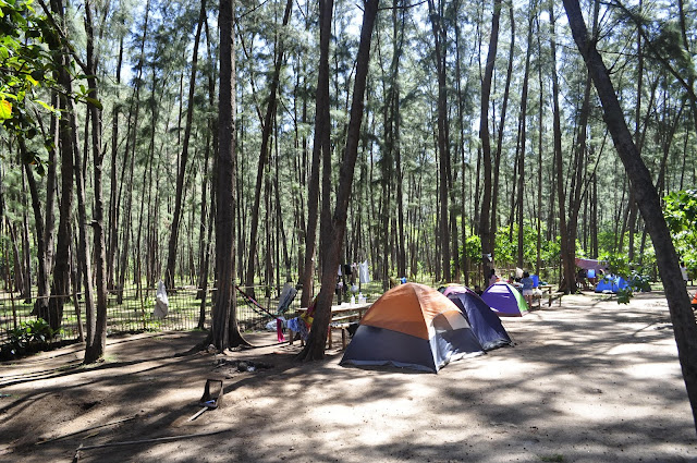 Beaches in the philippines zambales anawangin cove pine trees
