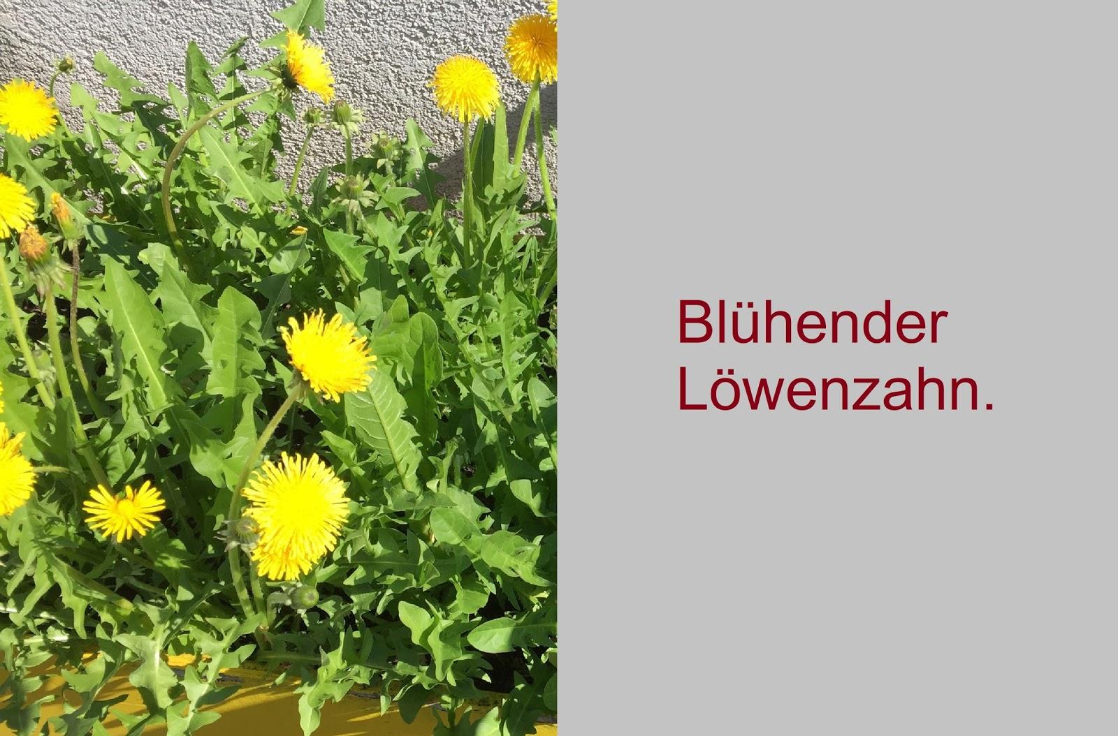 Stauden Lange Lang Bl C3 Bchende Blühende Winterharte Pflanzen Balkon Ostseesuche Com