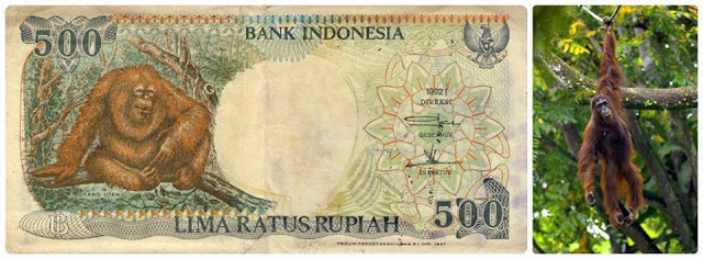 Penampakan Asli Dari Uang Rupiah Indonesia Lima Ratus Rupiah