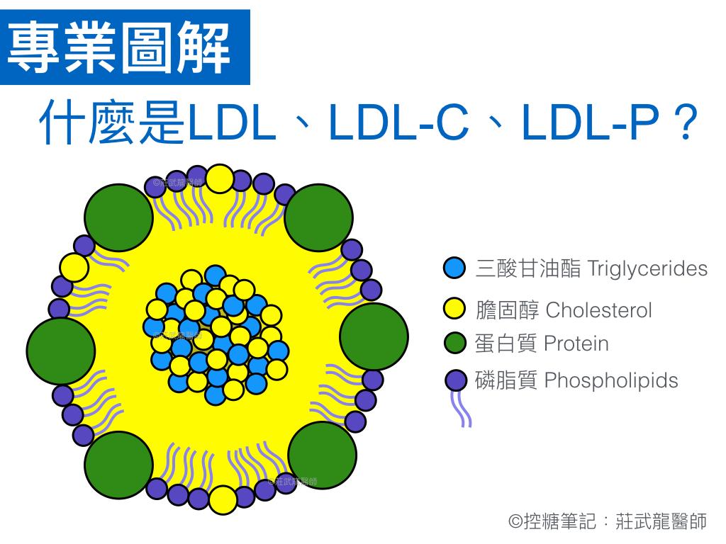 什麼是LDL低密度脂蛋白結構與組成