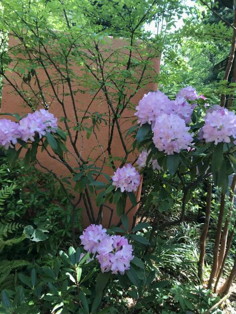 ジブリ美術館の辺りに咲いている花の写真です。