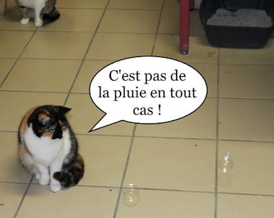 Petite chatte tricolore et bulles de savon.