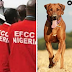 Drama As EFCC Officials Get Attacked By Dangerous Dogs Unleashed By Yahoo Boys