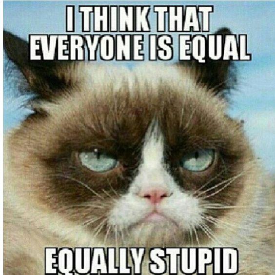 Grumpy Cat Memes 8