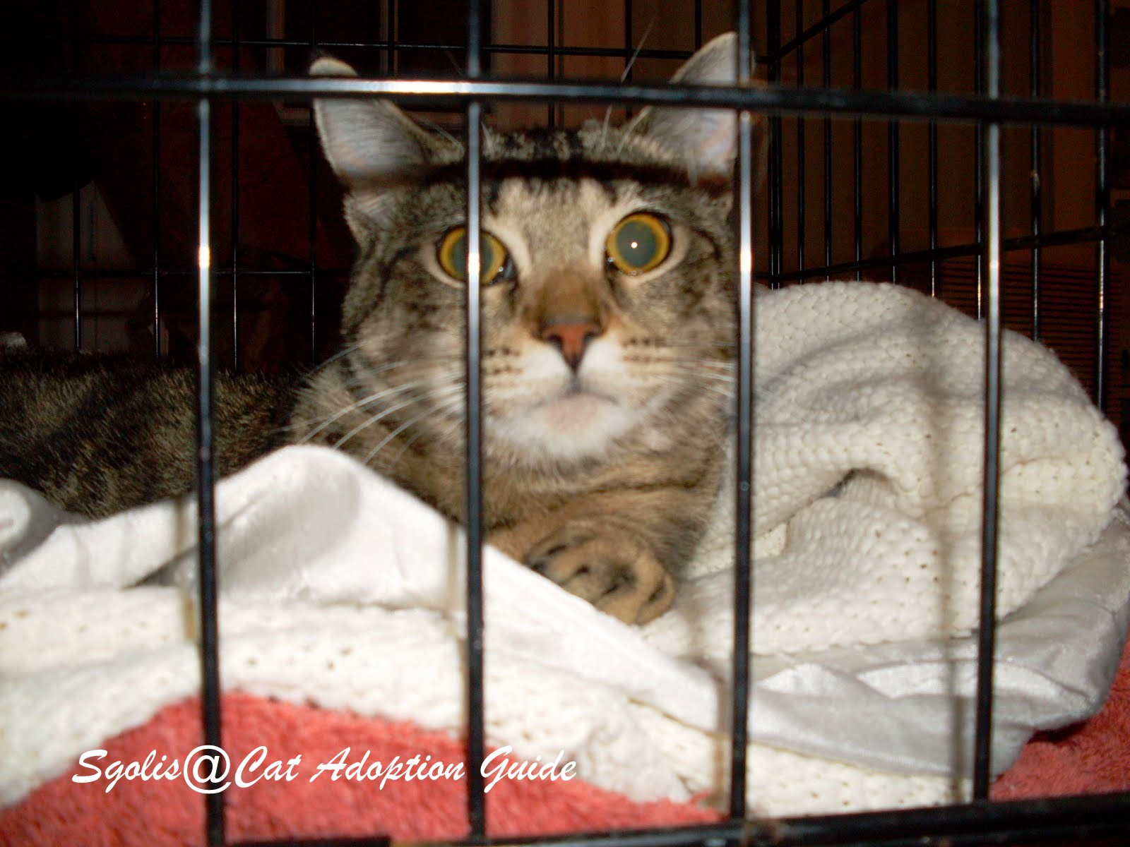 cat adoption guide