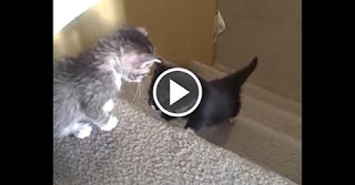 Kittens First Adventure on The Stairs. See How Cute They Are…