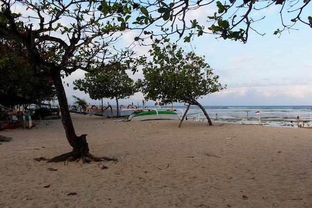 Unos árboles en Sanur Beach (Bali)