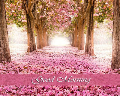 Wonderful attractive photos of Good Morning Wishing with beautiful flowers and tea and coffee cups.