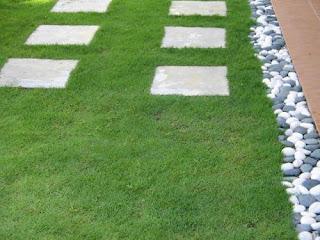 6 Jenis Rumput Untuk Taman Rumah Anda
