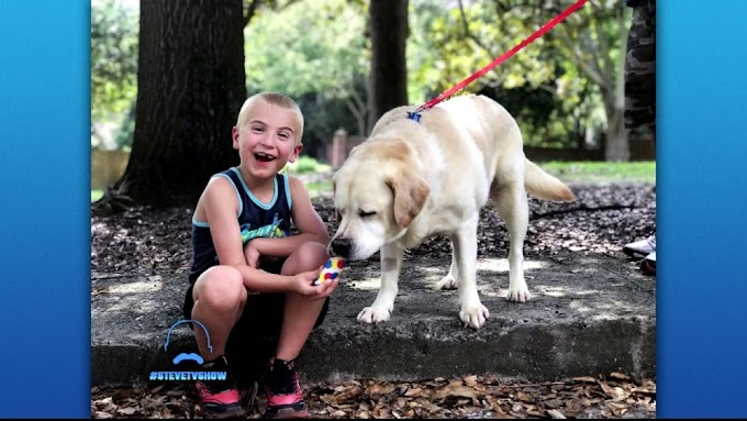 Watch: This 7-year Old has saved about 1,000 Dogs through his Non-Profit