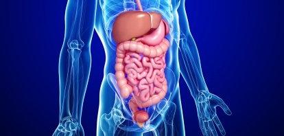 Tubo digestivo y biologia