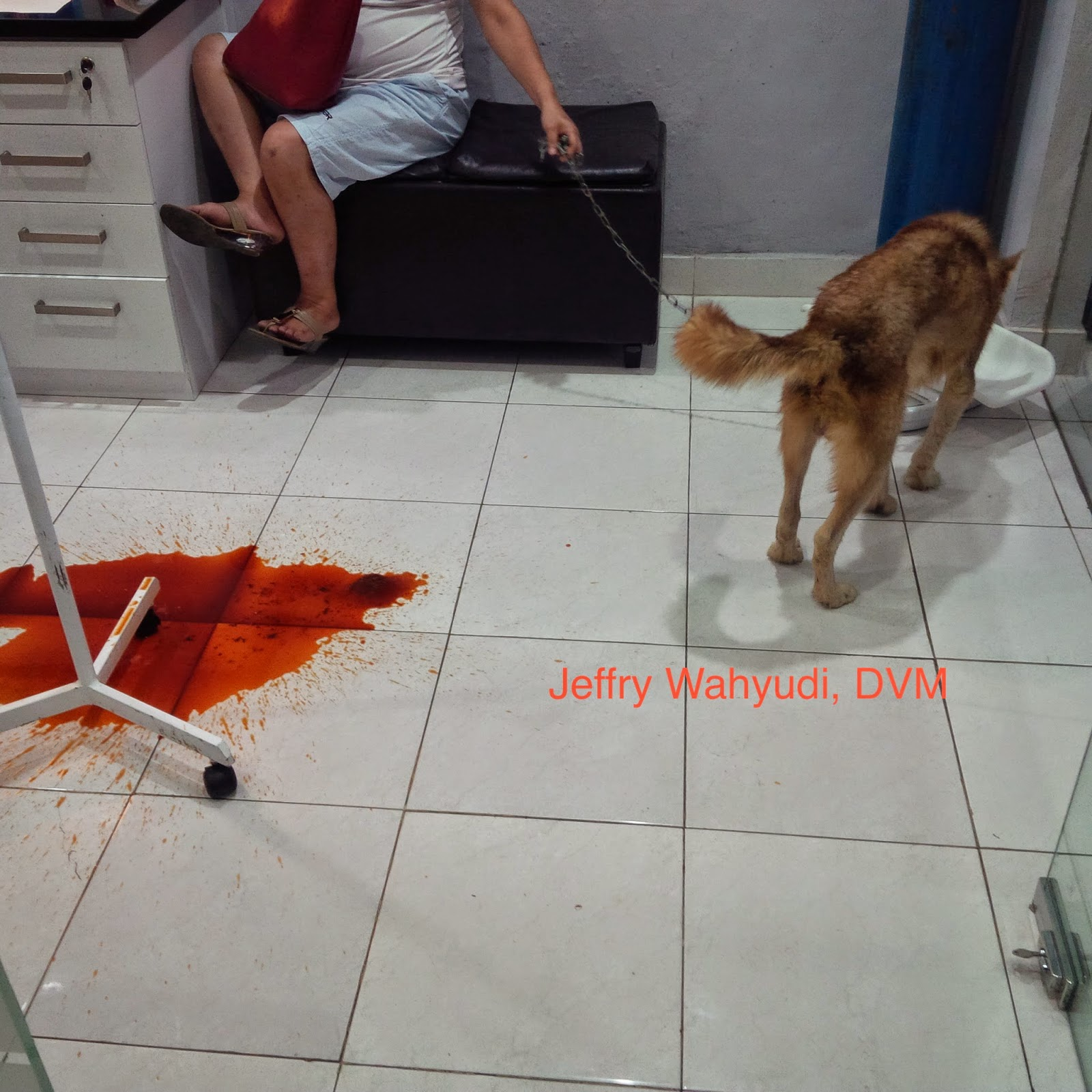 Dog Vomiting And Bloody Stool. Dog Vomiting Blood Clots ...