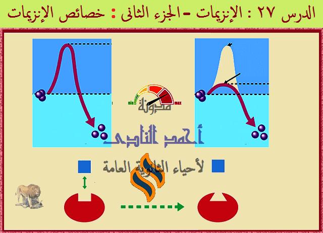 الإنزيمات - مدونة أحمد النادى- أحياء الثانوية العامة