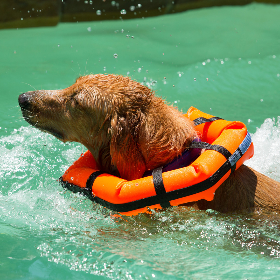 Can Dogs Swim Naturally