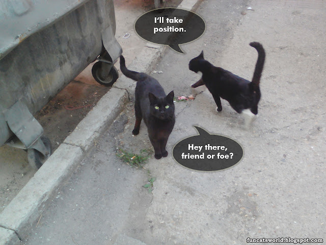 Cats Tactic