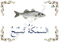السمكة تسبح