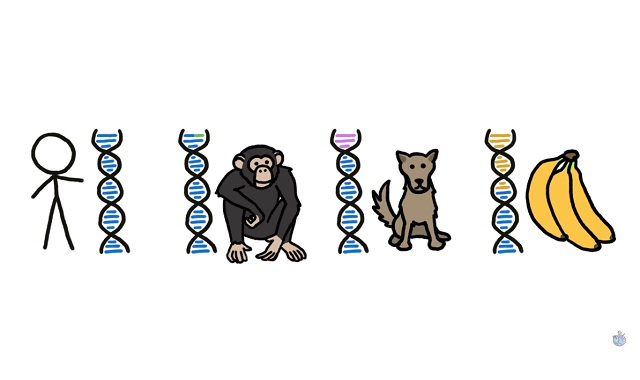 Do we really share 99% of our DNA with chimps?