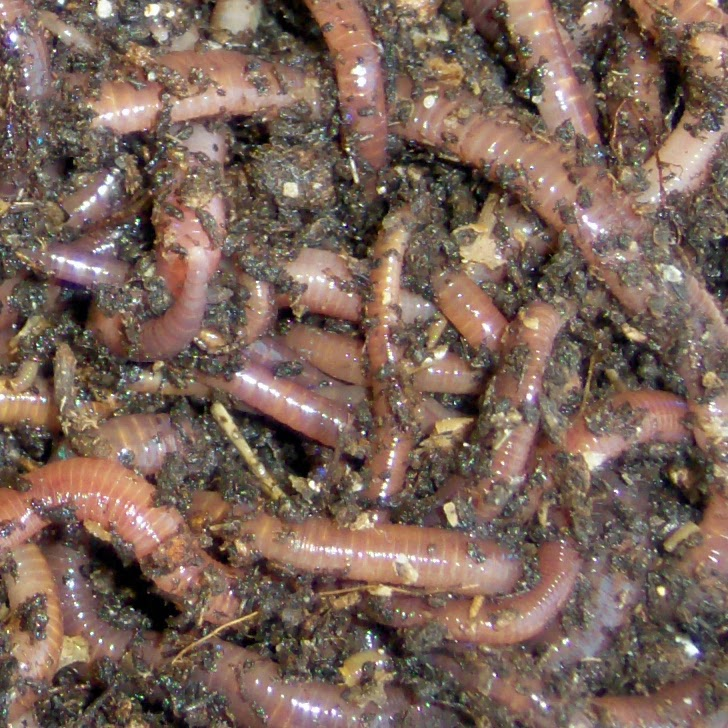 Make garden soil with earthworms