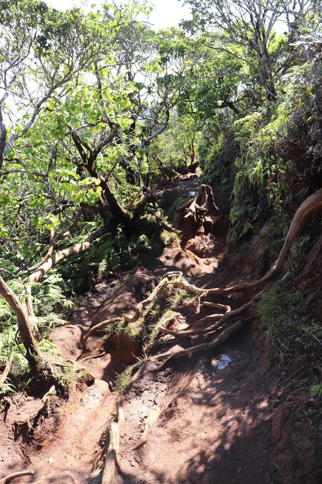 Hiking trail Napali