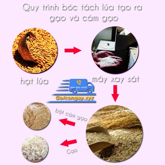 cách hạt gạo được tạo ra