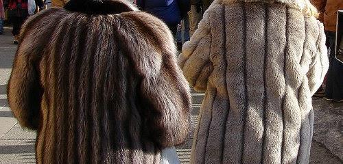 13d0c3c20 Marc Kaufman Furs NY Vegan's are Starting to Wear Fur Coats and Fur Jackets  | Marc Kaufman Furs Nyc