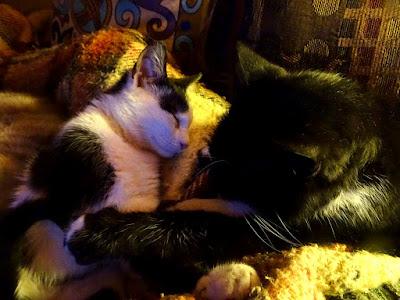 Ο Πιέρ και η Μπουκίτσα, δυο γατάκια κοιμούνται αγκαλιασμένα