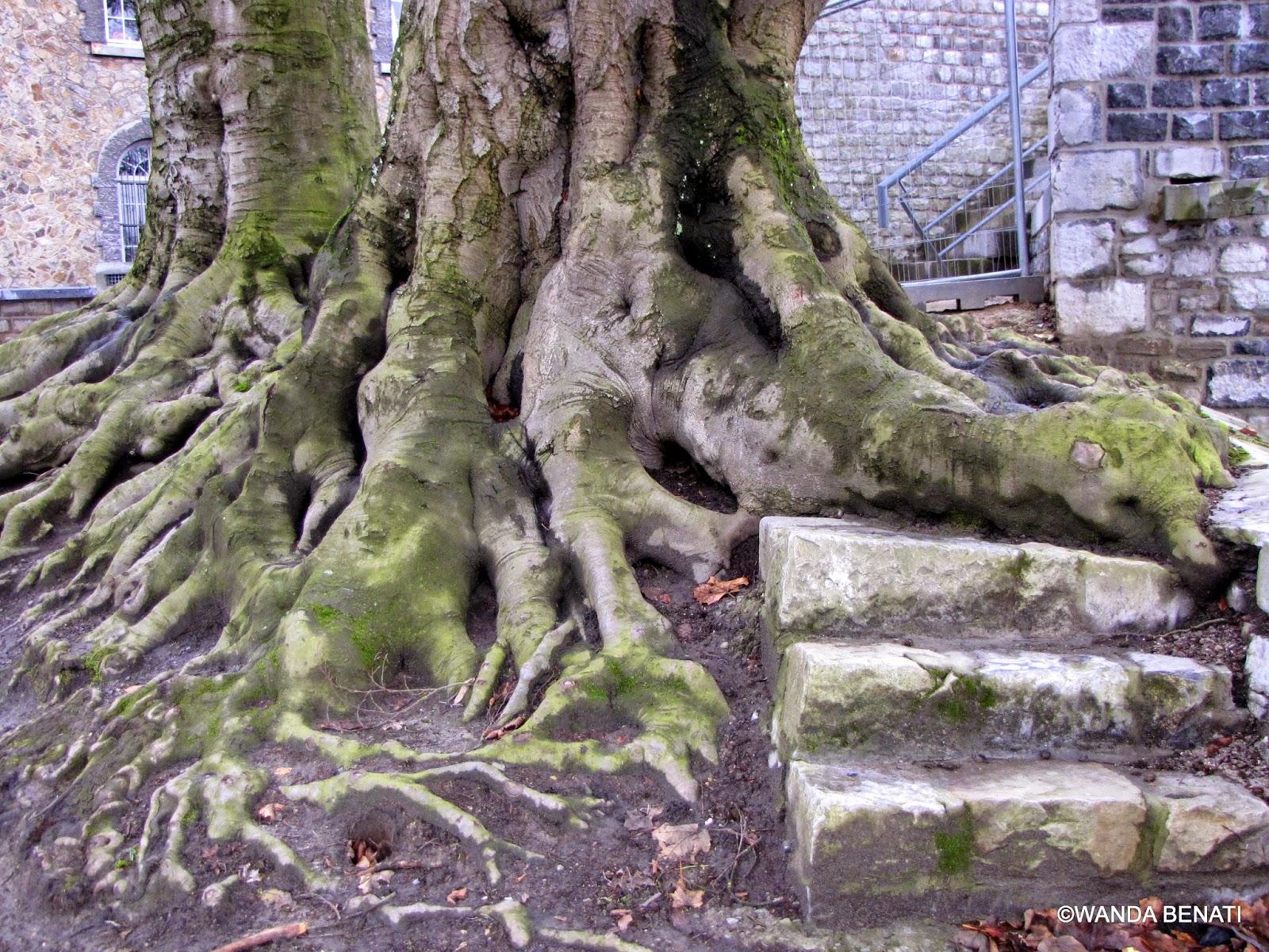 Cittadella di Namur: ruderi e alberi secolari