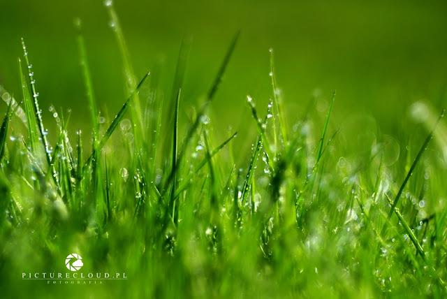 tylko trawa