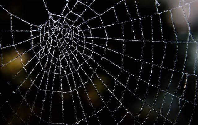Hukum Menghancurkan Sarang Laba-laba
