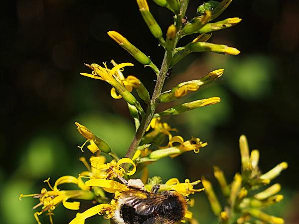 Puutarhan keltaiset kukkijat
