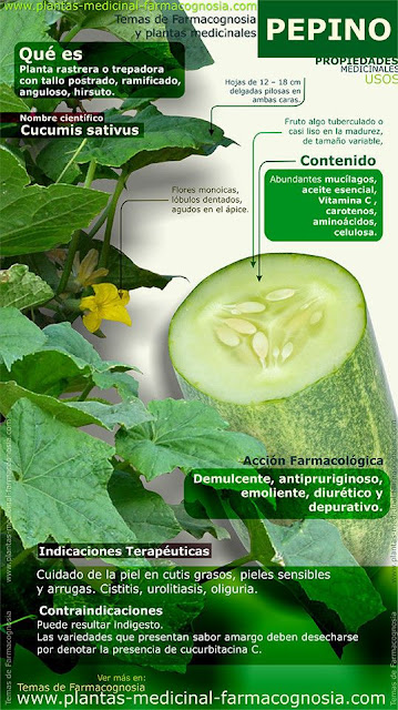 PEPINO Y BENEFICIOS