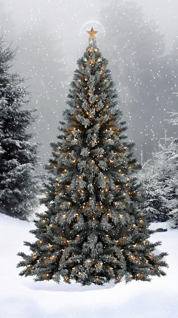Desktop HD Wallpaper Trees Garland Star Snow Winter