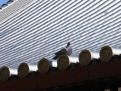 守口市 難宗寺本堂の屋根にとまるハト
