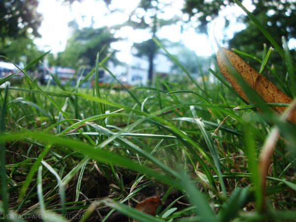Pasto en un parque de Hamburg